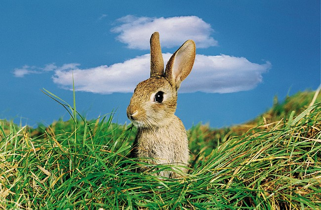 Some splendid news from a very happy bunny... Images
